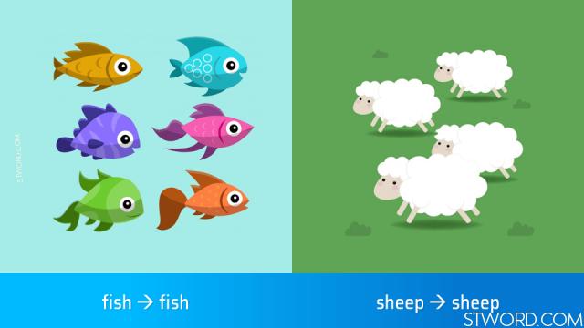 fish, sheep