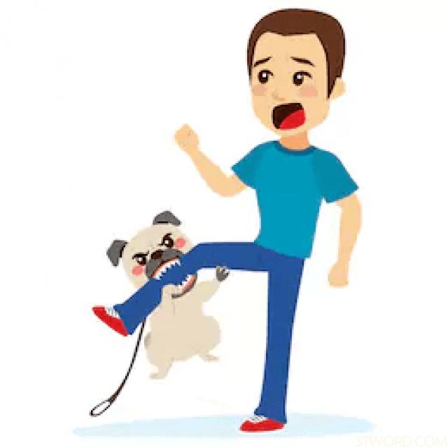 Câu bị động: My son was bitten by a dog